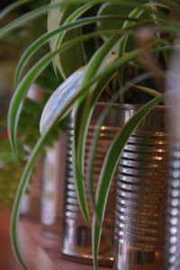garko plants